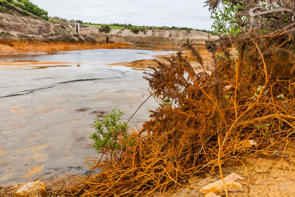surreal image of polluted orange plants in cornwall